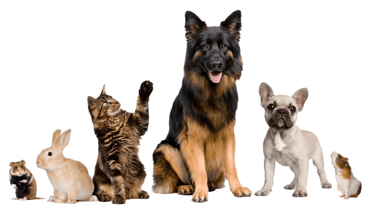 7 Easy Ways to Keep Your Pet Happy and Healthy