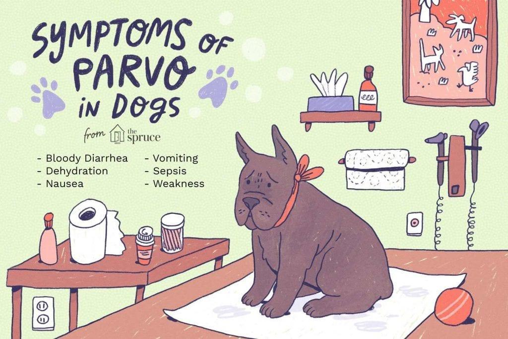 parvo-in-dogs