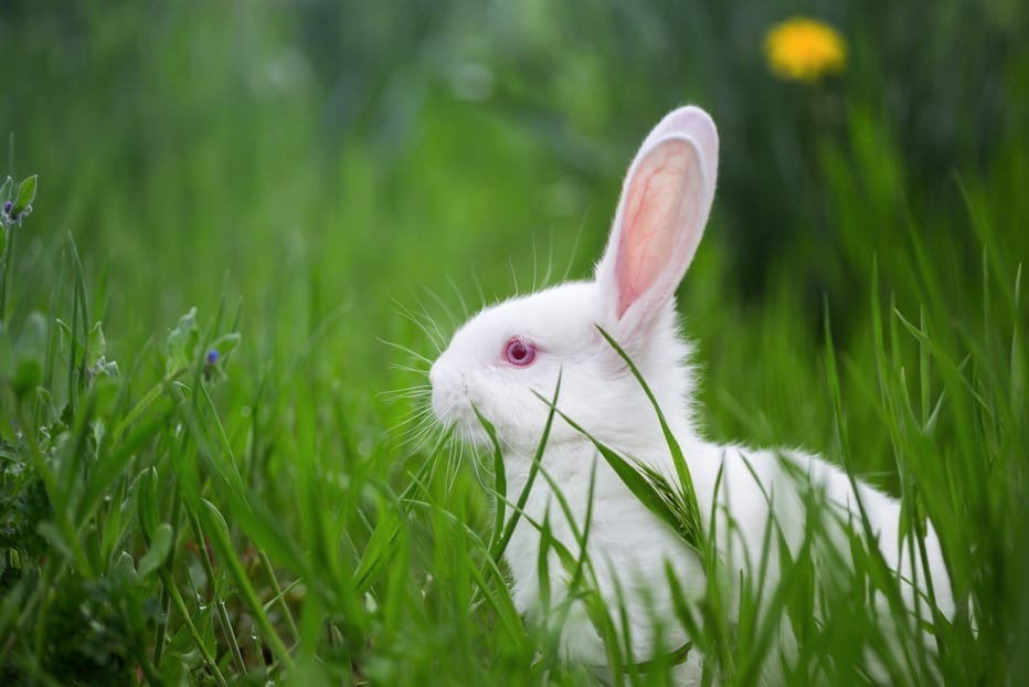 Ways to Look After a Pet Rabbit's Health