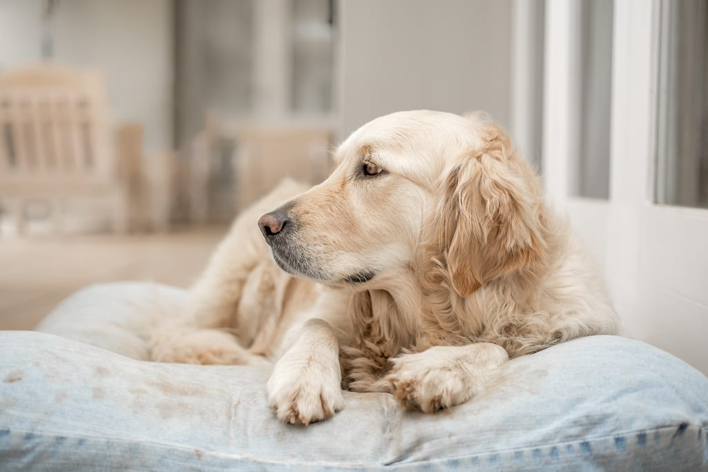 Important Signs When Your Pet Needs Urgent Care