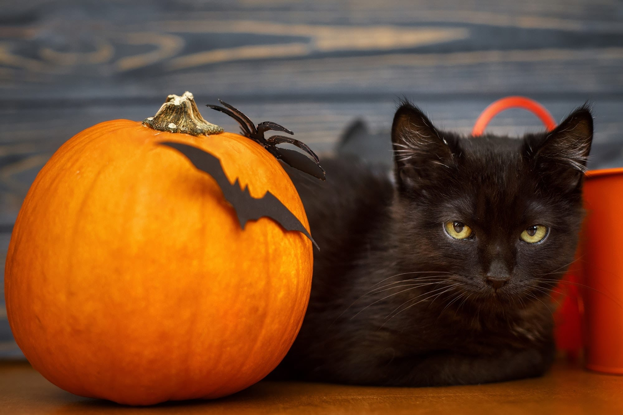 safety tips for pets during halloween