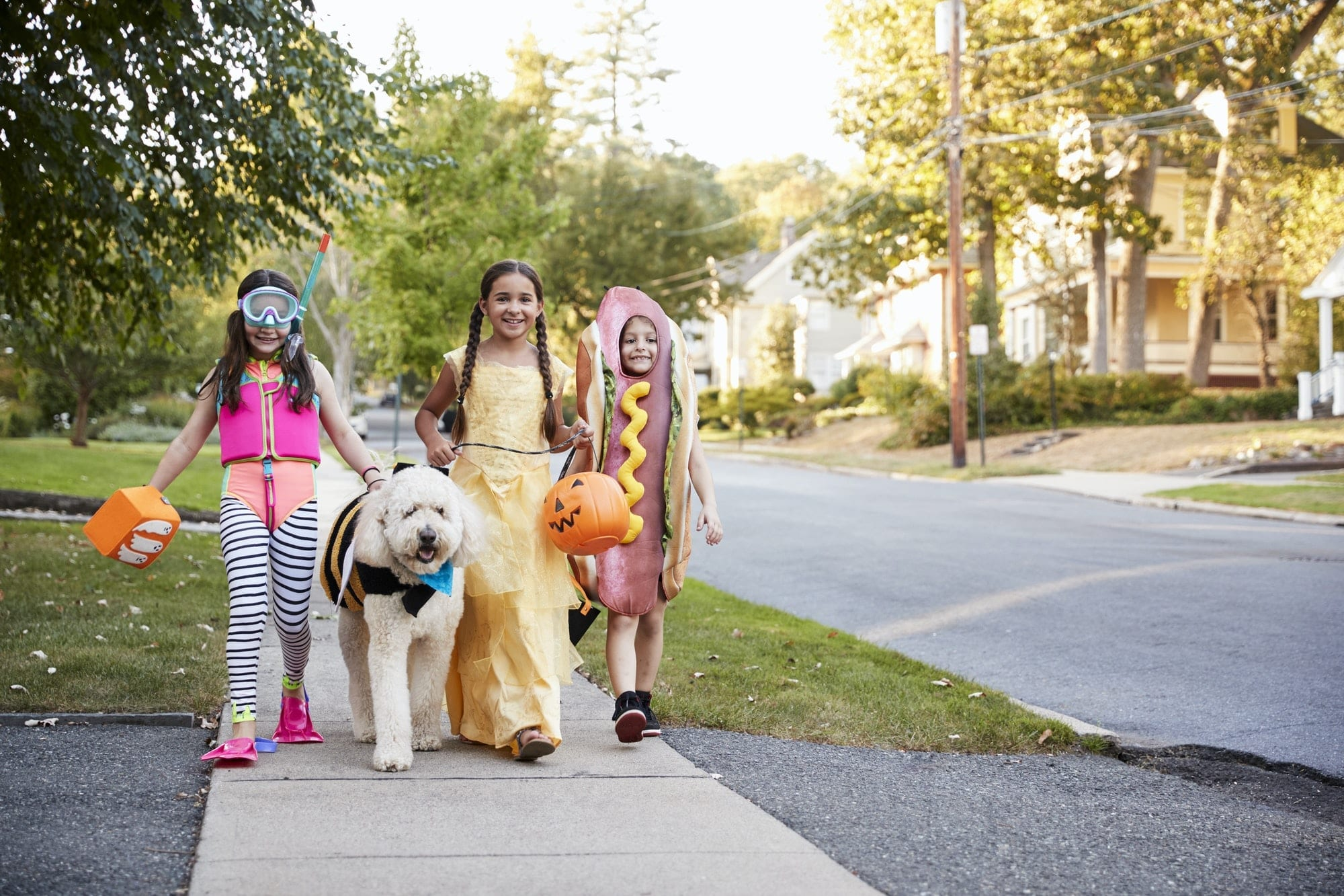 keep your dog stress-free this halloween