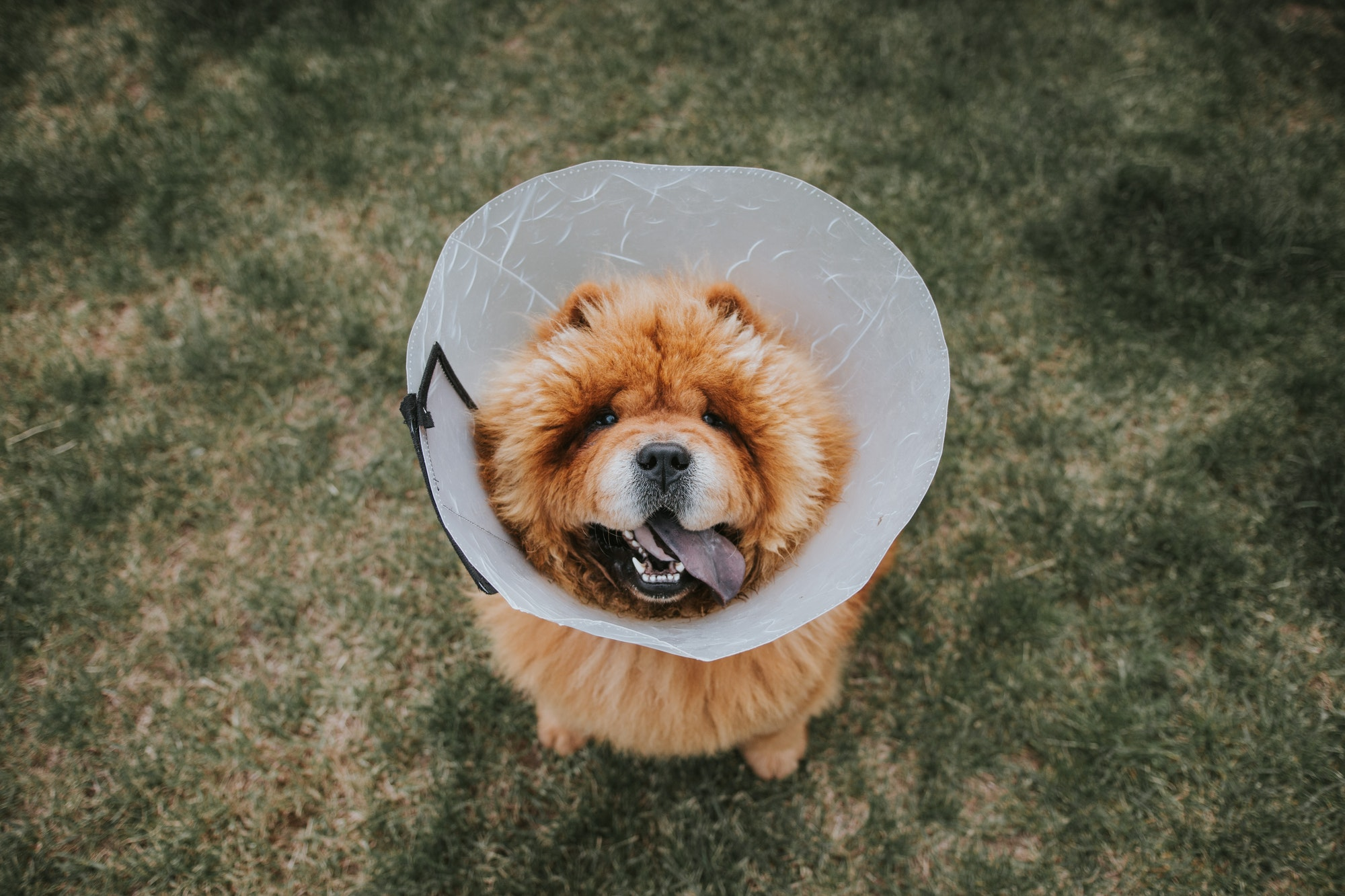 treatment for hookworms in dogs
