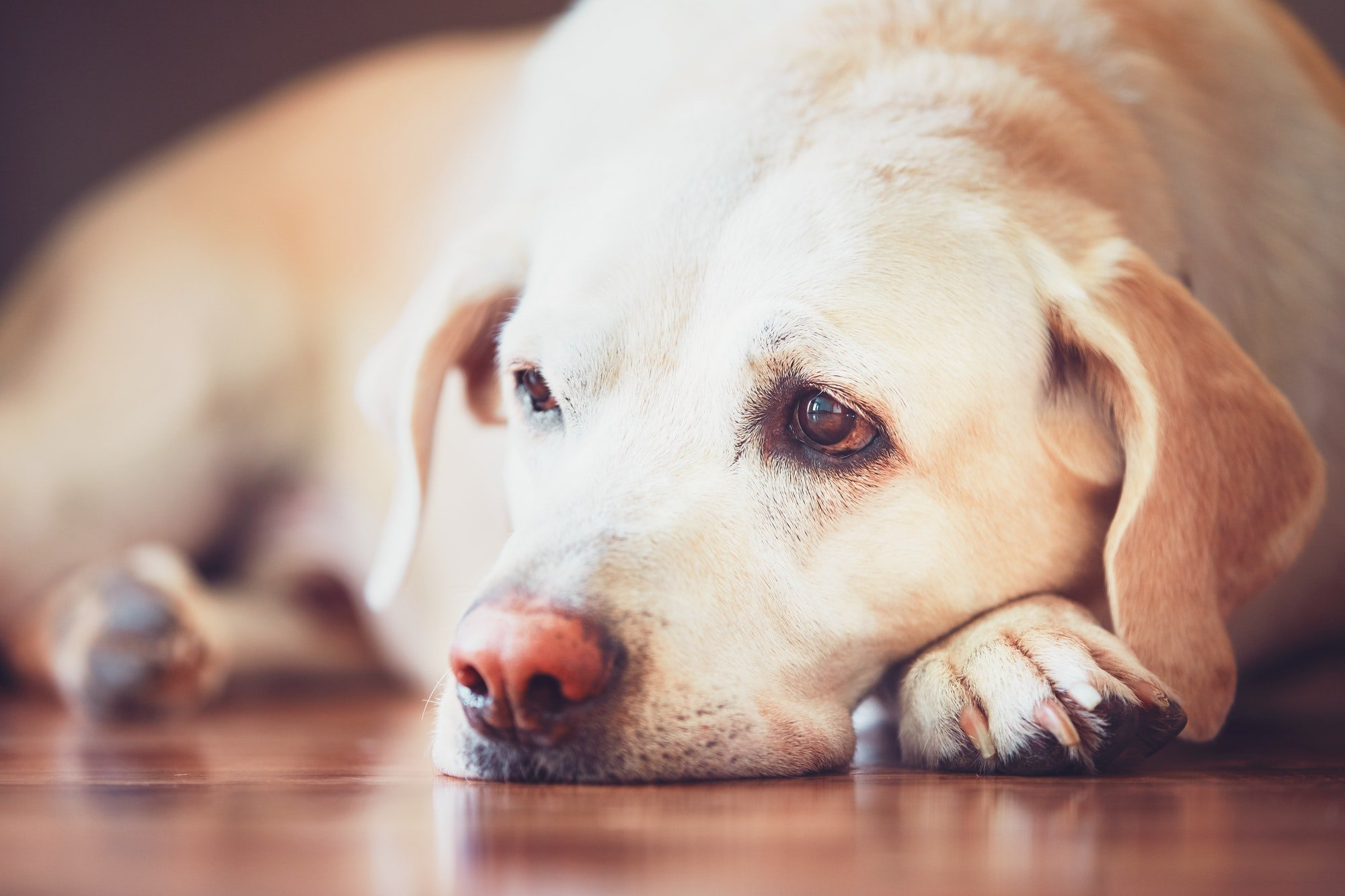 causes and treatment for hookworms in dogs