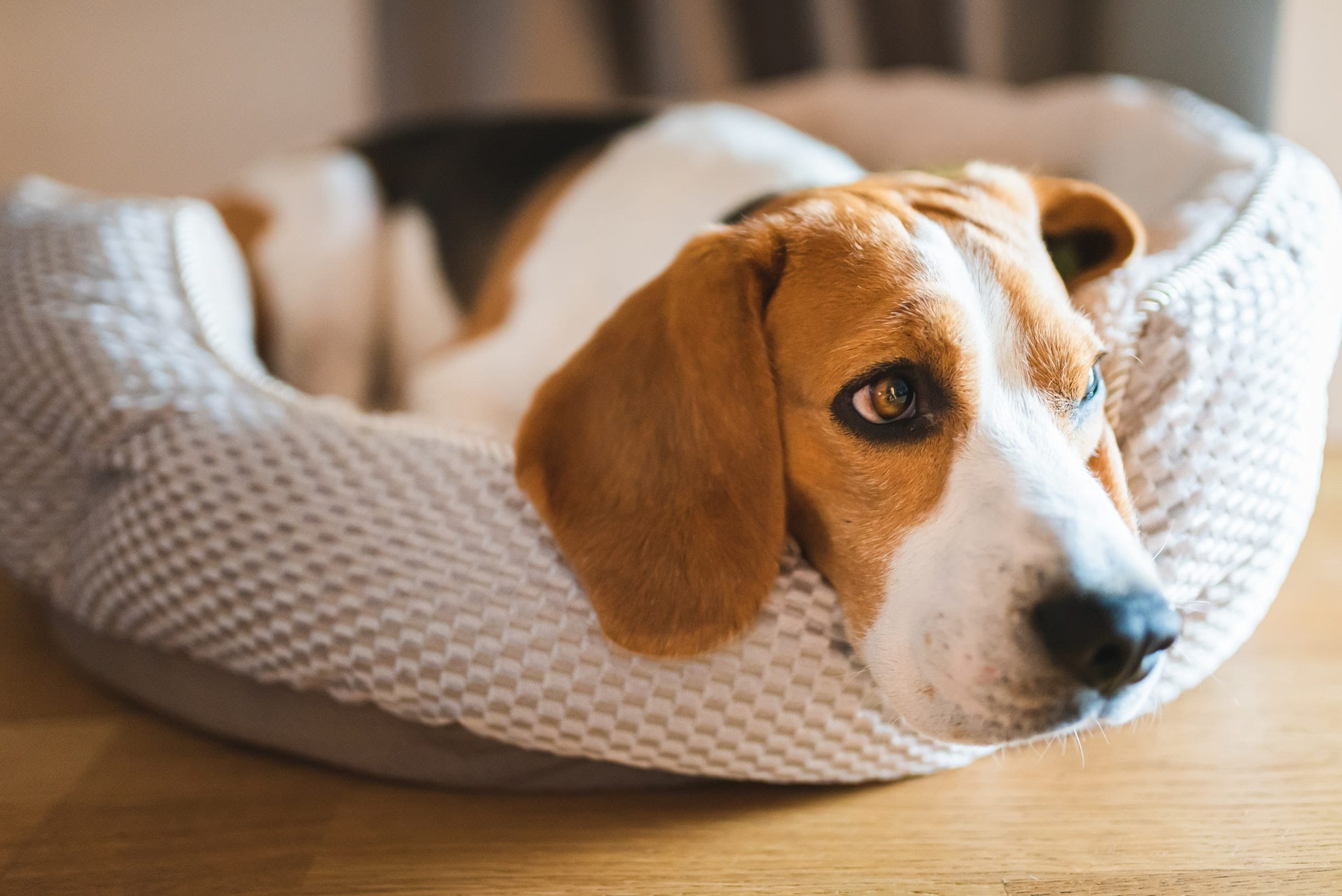 prevent hookworms in dogs with a simple trick