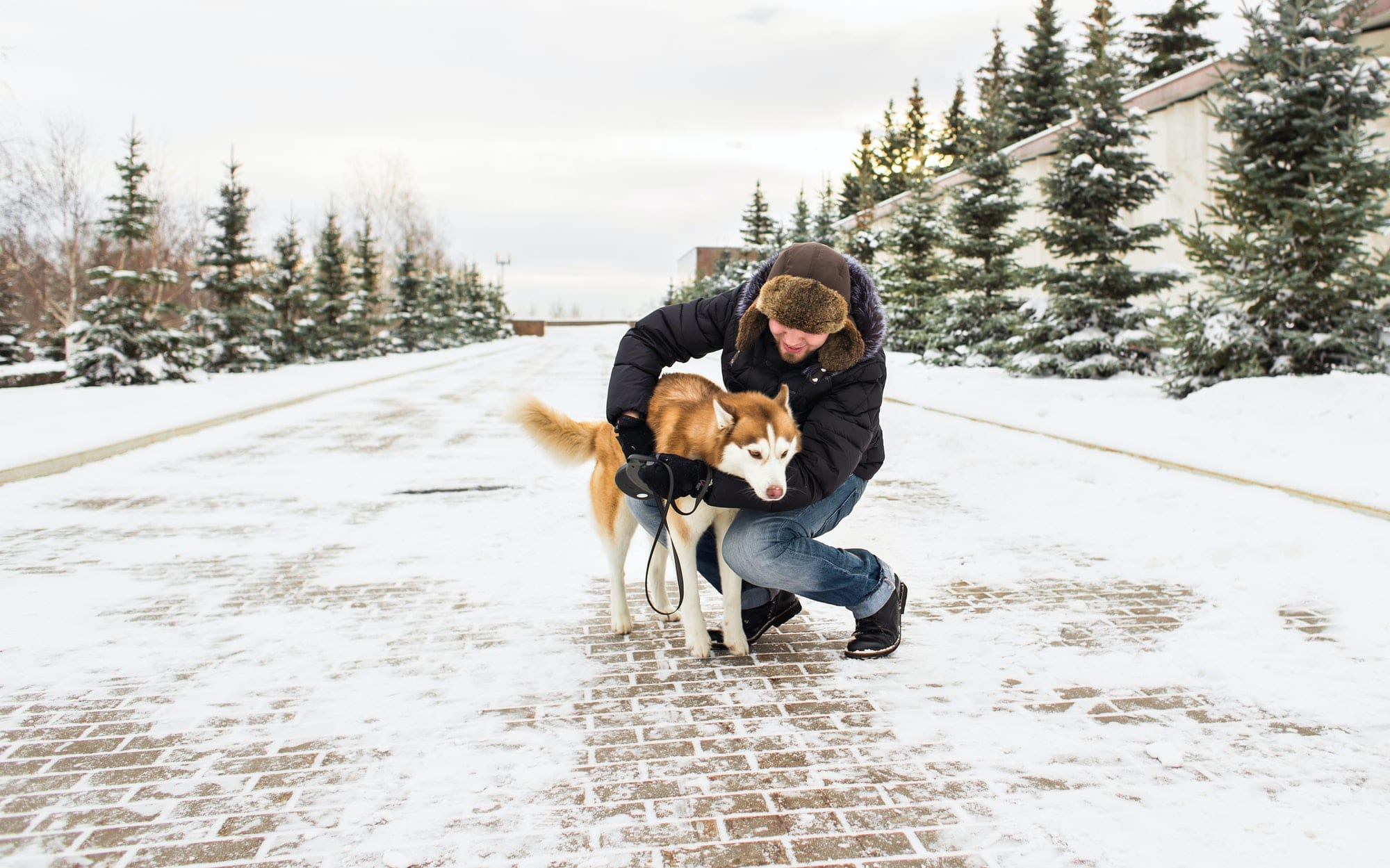 how to protect your dog during winters by veterinary around you