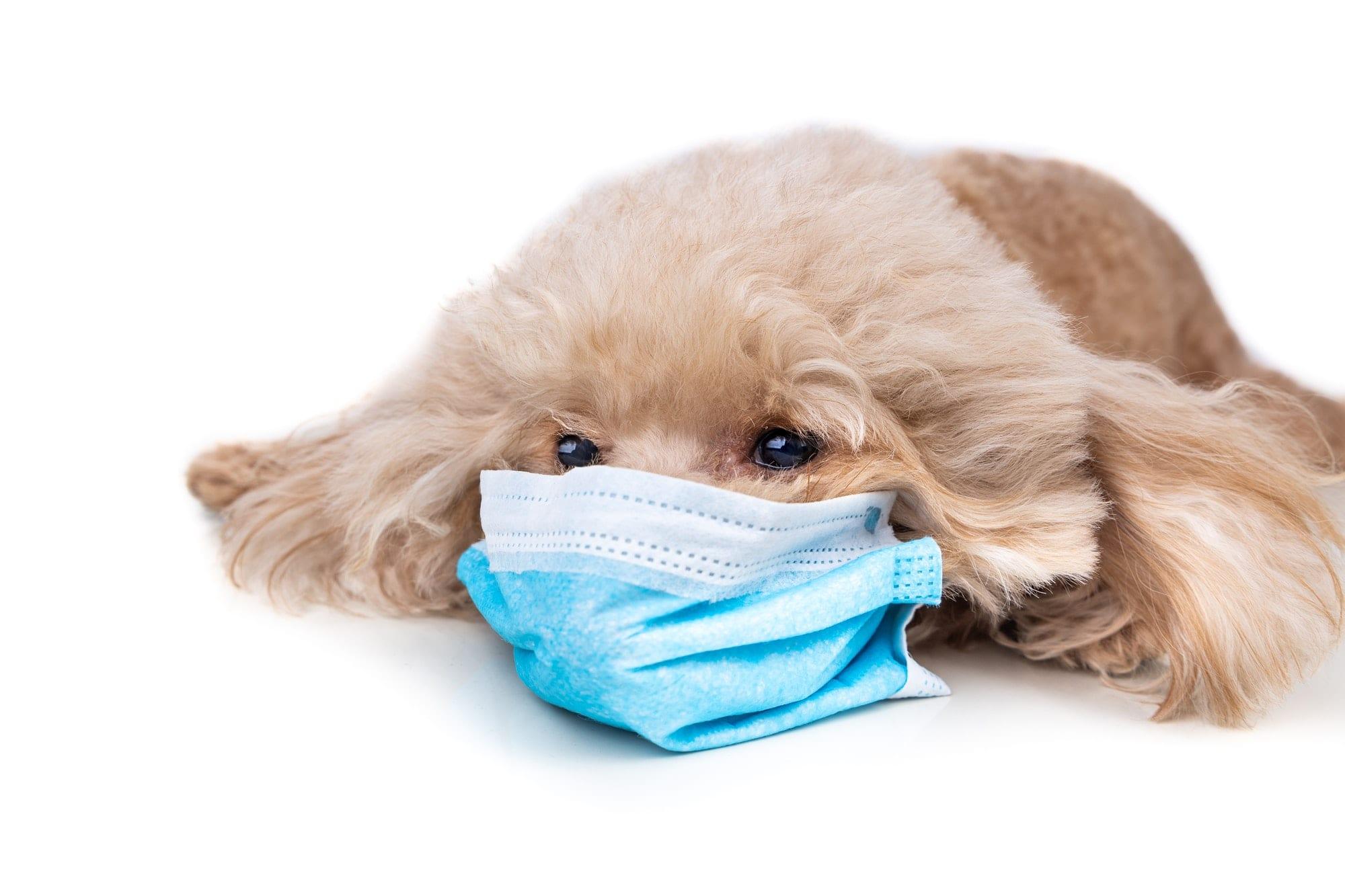 top veterinarians describe most common types of cat allergies