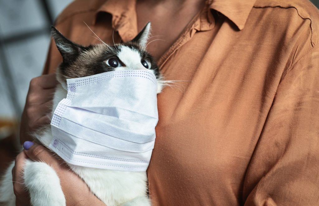 most common types of cat allergies