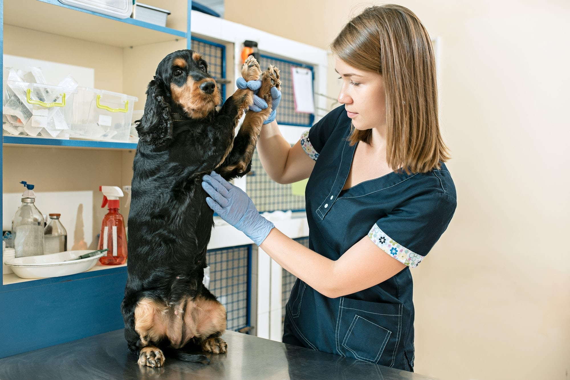 5 pet safety tips