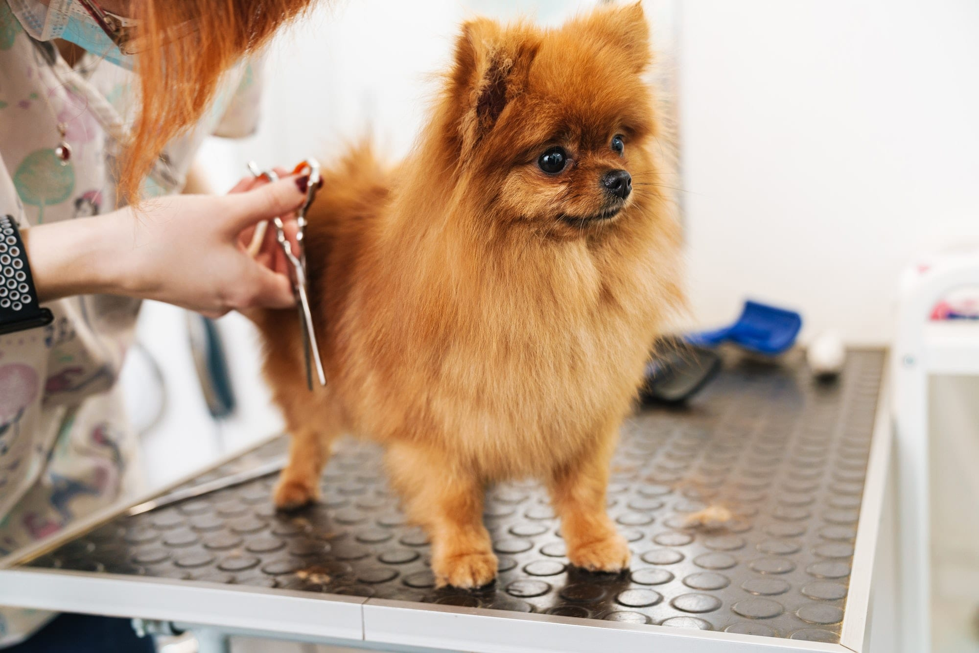 tips for pet care during summers