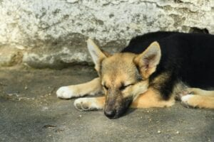 signs of depression in a dog