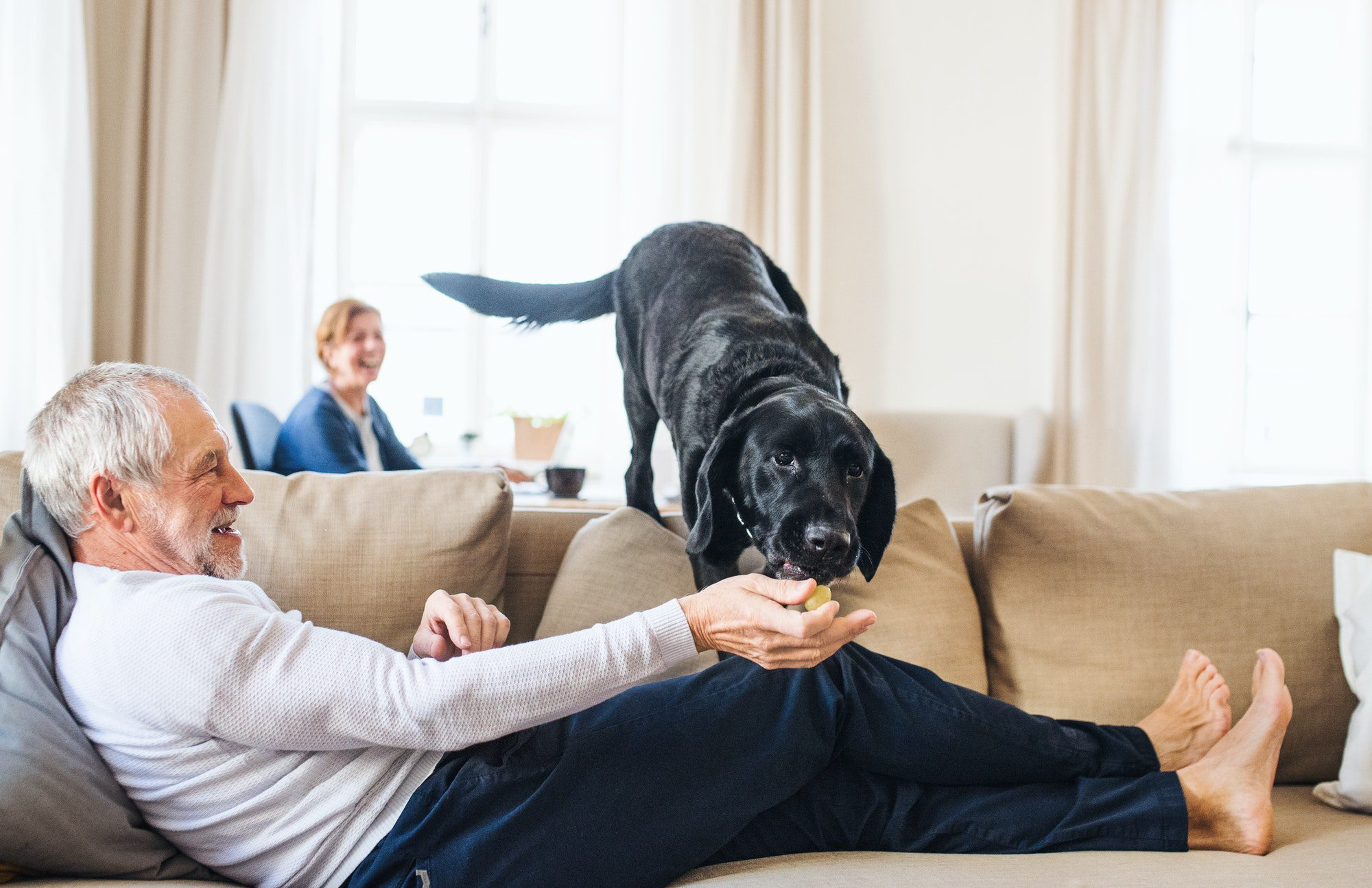 guide to pet-proofing your home