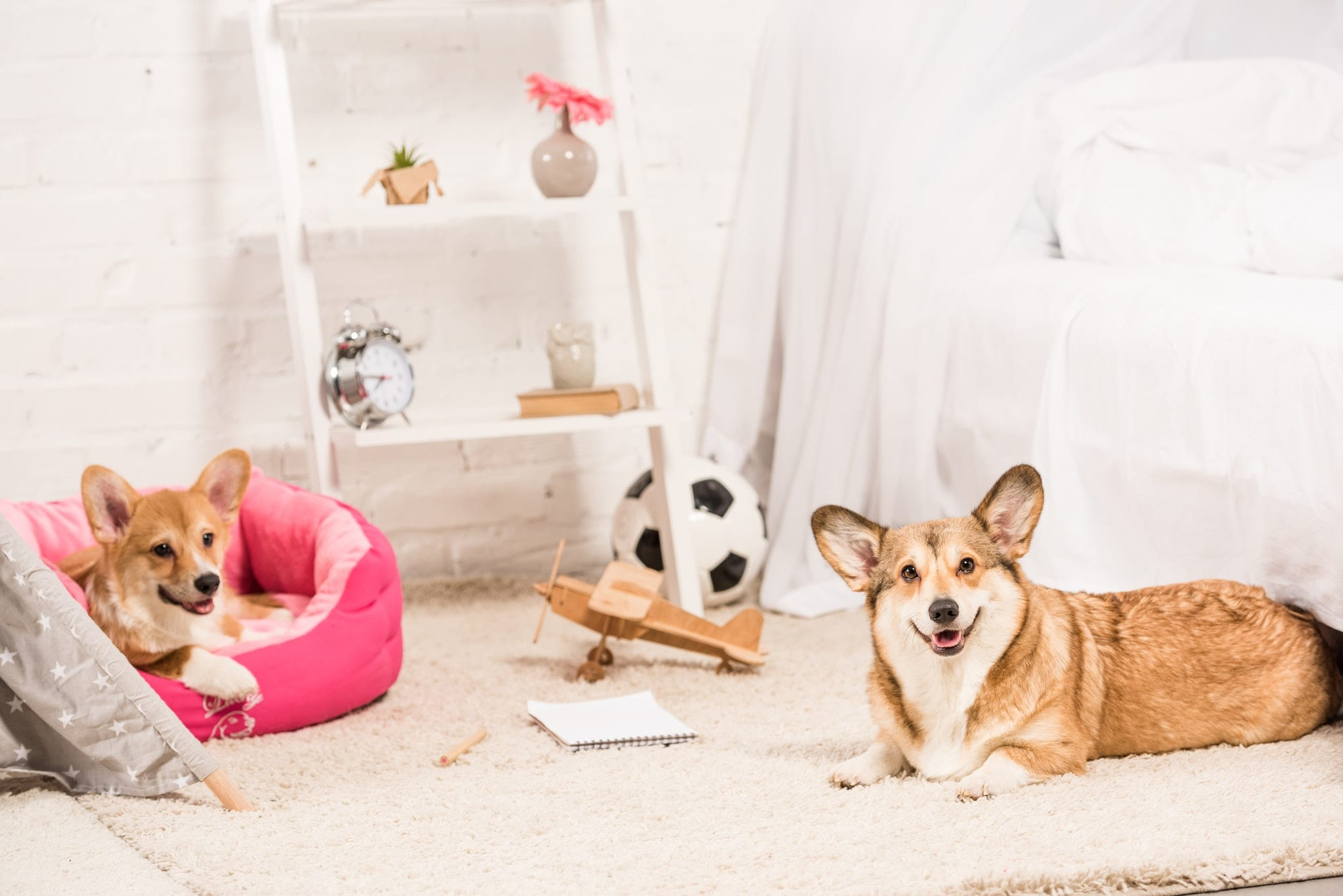 pros and cons and best pets for your home