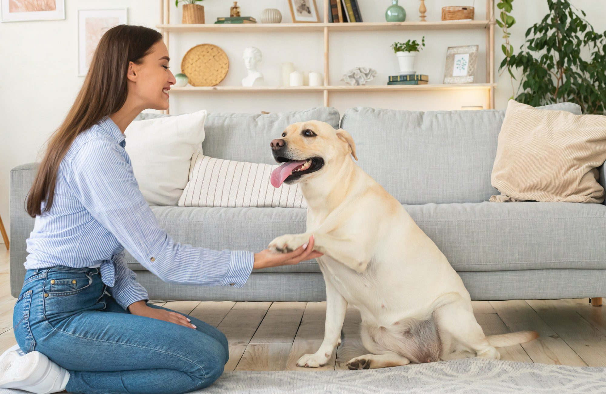 tips to house-train your dog