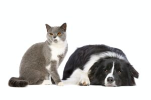 cats and dogs as pets
