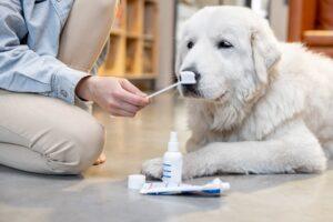 dental health of your dog