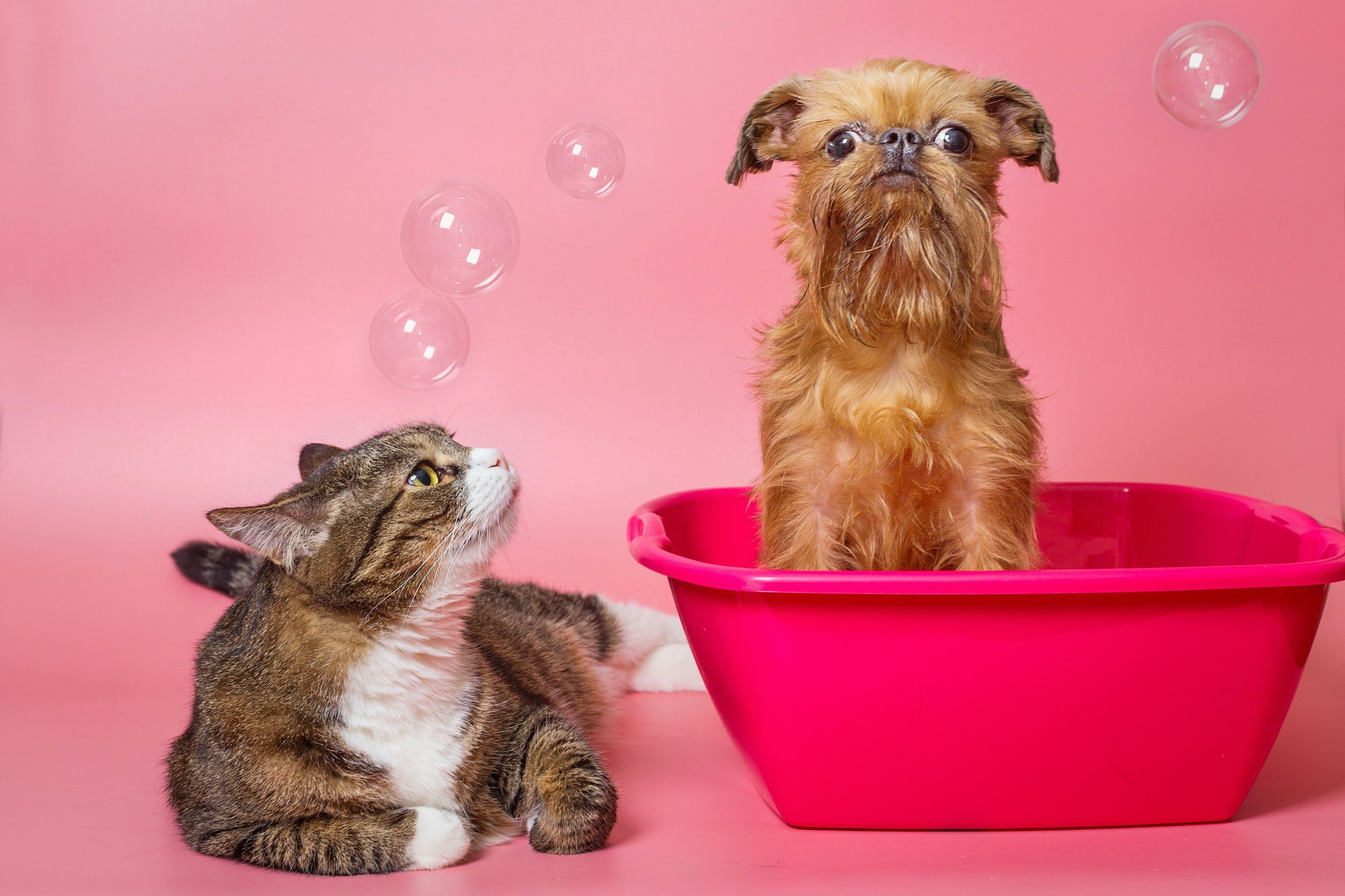 differences between cats and dogs as pets