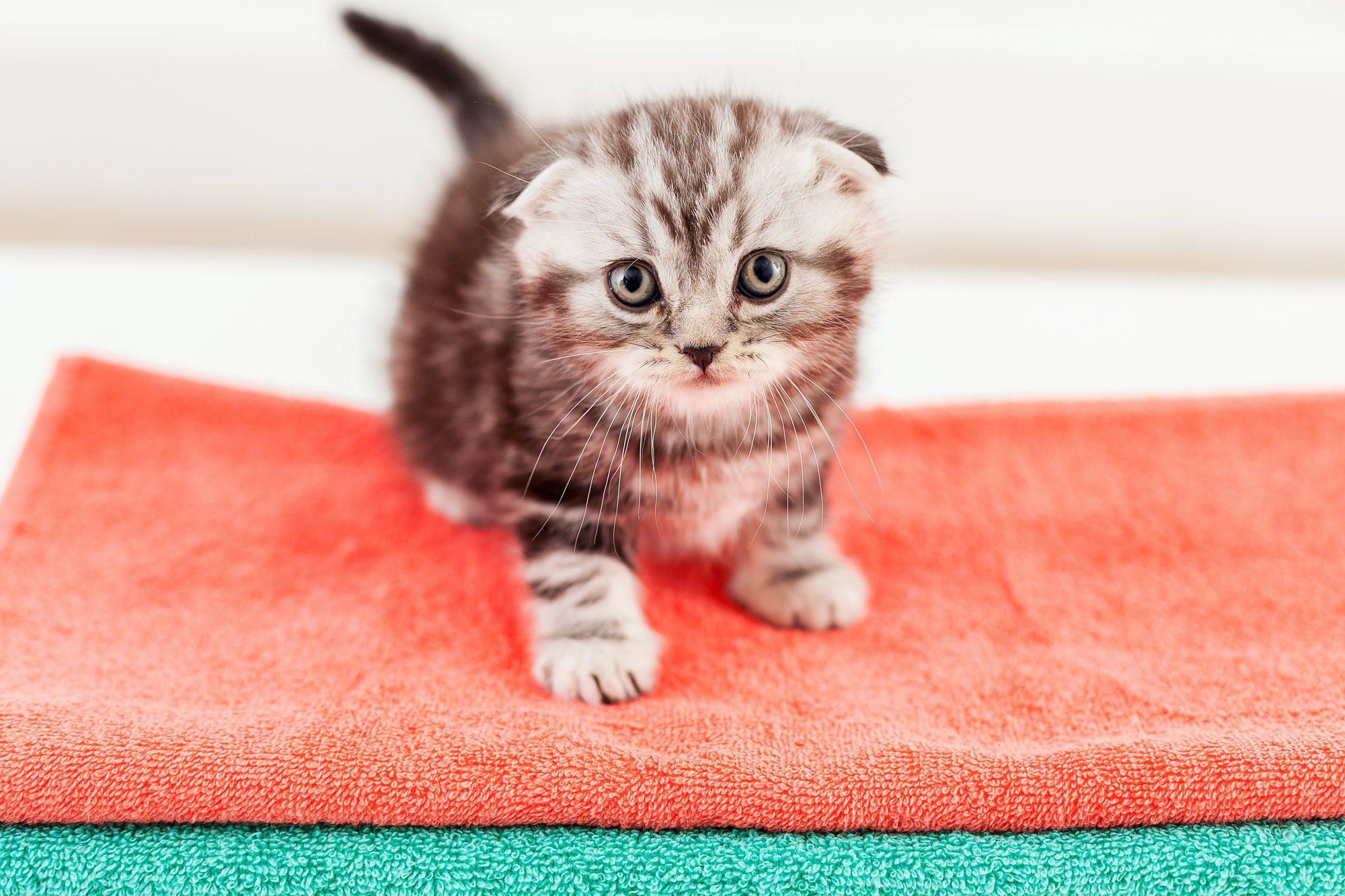 3 effective tips on litter training your kitten