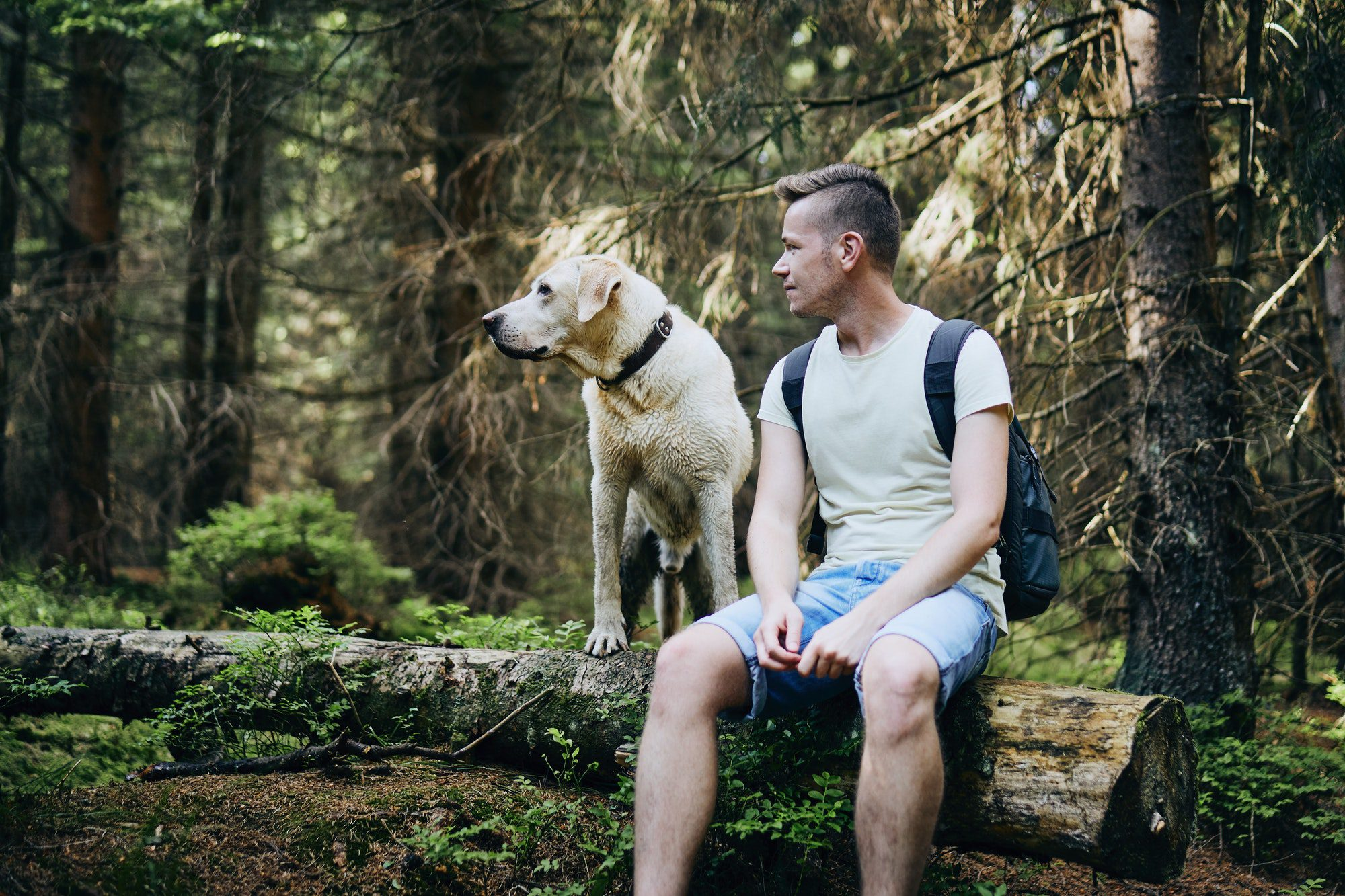 5 reasons why dogs are the best pets