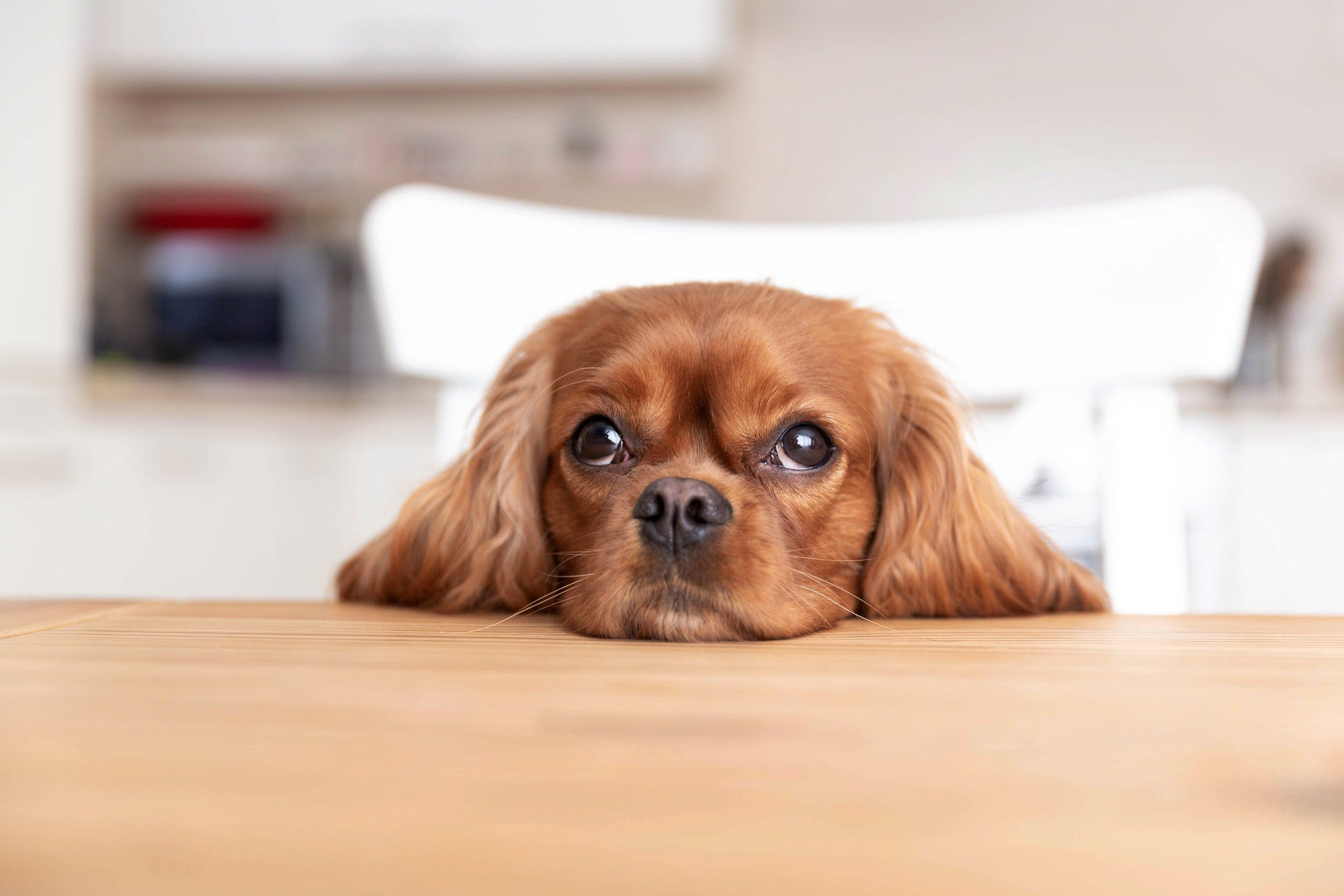 dangers and diseases that can kill your dog