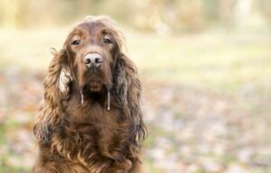 diseases that can kill your dog