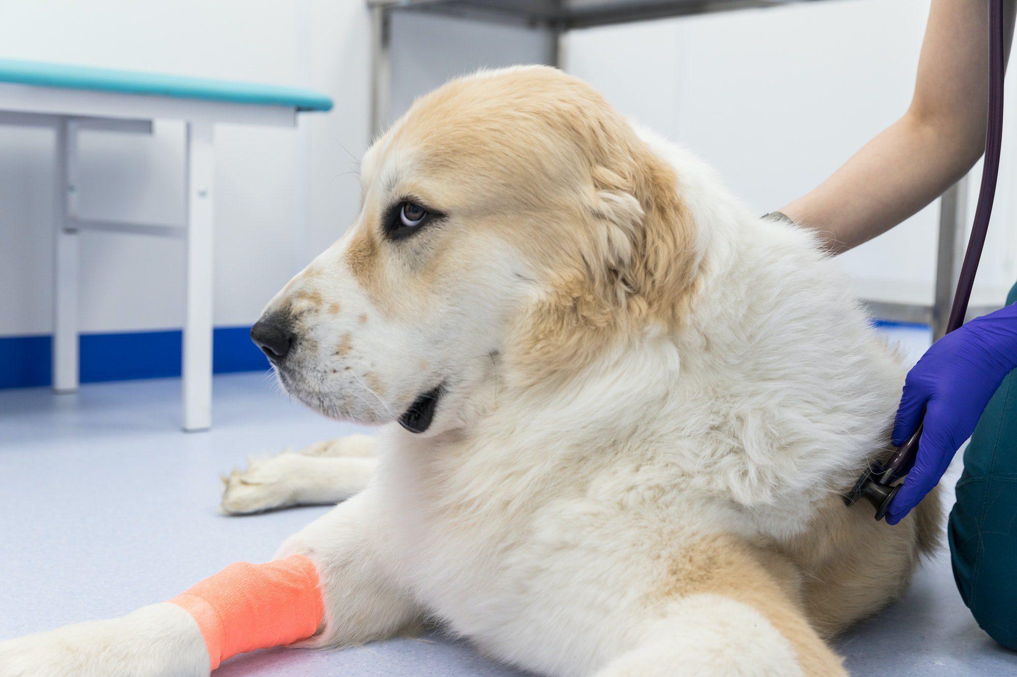 life threatening dog diseases