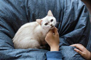 tips on litter training your kitten